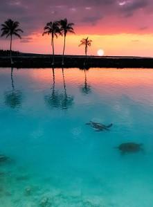 Stunning Hawaiina Sunset